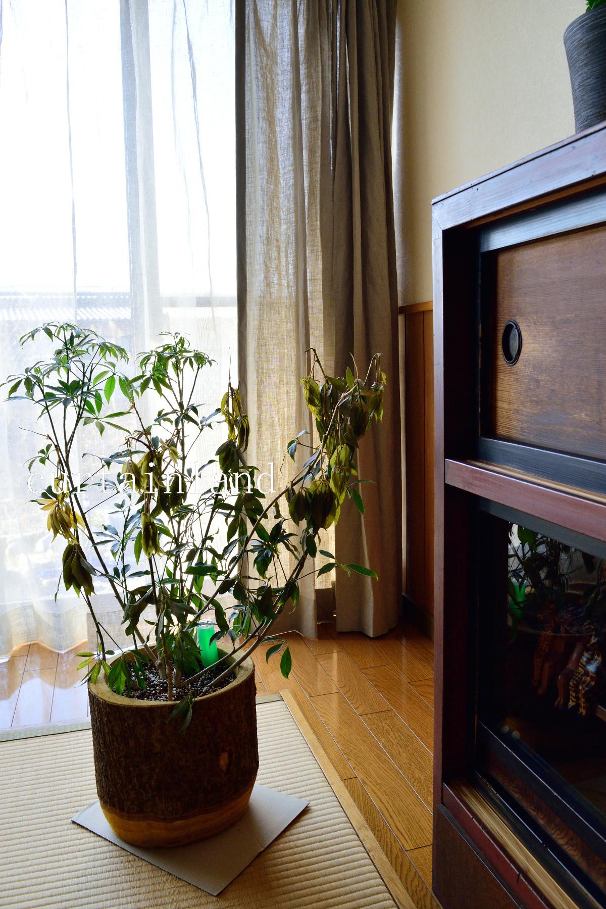 植物とリネンカーテン
