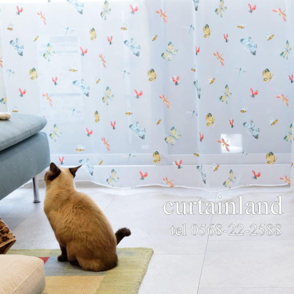 ネコちゃんも気になるちょうちょ柄のレースカーテン